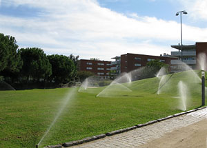 Water sprinkler showering grass